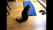 Котка играе i Spy