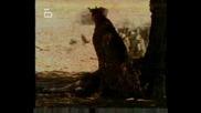Гепардите - Жестоките Преследвачи (4 Част)