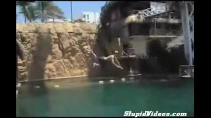 Болезнен скок в басейн! Много Смях!