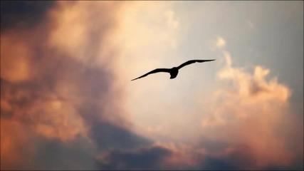 Archetek - Soar (ft. Sodie)