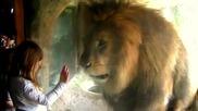 Гладен лъв