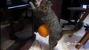 Котето не може да се отърве от нахалният балон