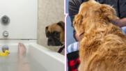 Защо кучето ви следва дори в тоалетната?