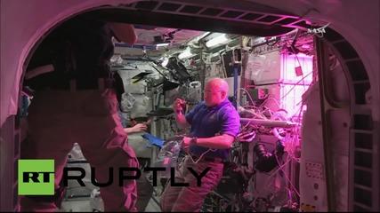 Астронавти ядат отгледана в космоса маруля за първи път в историята