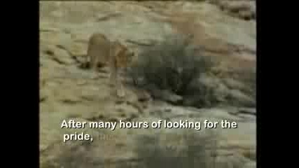 Christian The Lion Meets Old Owners Reunit