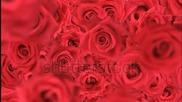 Цветя ,радост , любови възхитителната музика на Шопен