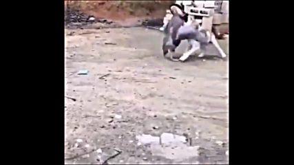 Куче Срещу Гъска