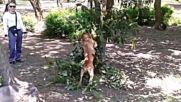 Лудо куче в морската градина
