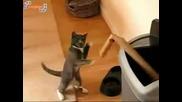 Котка Боксьор