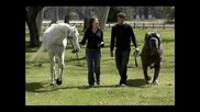 Най - Голямото Куче На Света