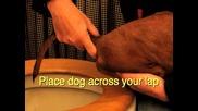 помогнете на кучето си да ака
