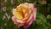 Ernesto Cortazar - Concierto De Aranjuez - Beautiful Mothers Day Roses