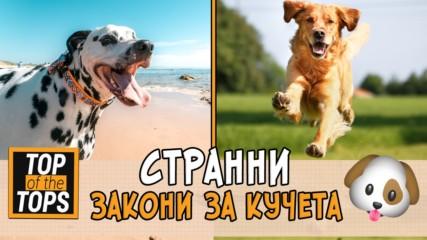 Странните закони за кучета по света