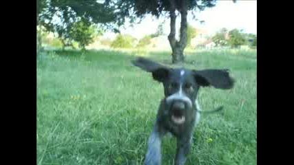 Моето Куче