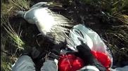 Парапланерист се сблъсква с орел високо в небето