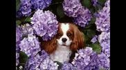 Цветя и Животинки