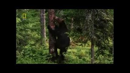 Дикая Природа России ~ Урал 2 част- National Geographic