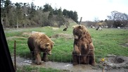 Сладки мечета в зоопарк