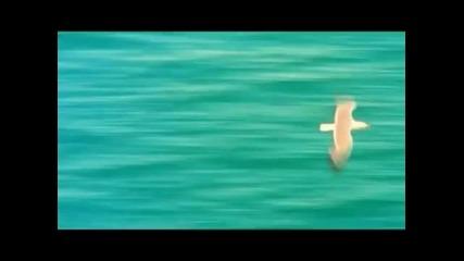 • превод • Gabriel Davi - Beautiful (official video) (hq)