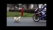 Разходка На Кучето Със Сузуки