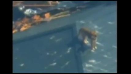 Куче в Япония намерено в океана 3 седмици след цунамито