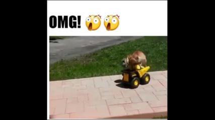 Смях! Куче иска да шофира самосвал!