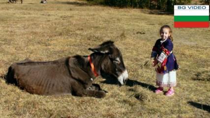 Приют за стари магарета