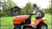 Куче коси ливадата
