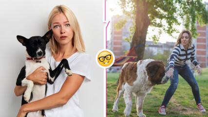 Полезно: какво да правим, ако срещу нас има агресивно куче