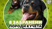 8 забранени породи кучета