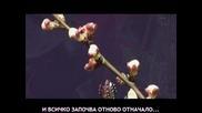 [превод] Първата ни целувка / Despina Vandi - To proto mas fili