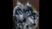 Биология на вълка