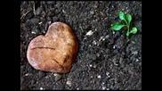 David de Maria - Amor Multiplicado Por Dos - Превод
