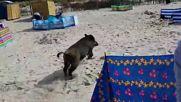 Ужас на плажа ! Глиган изкача от морето !