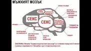 За какво си мисли мъжкия мозък ?