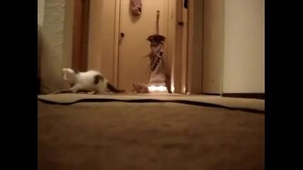Котенца се страхуват от прахосмукачка