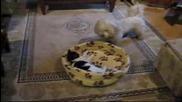 Кучето Здравата Се Е Ядосало На Котката