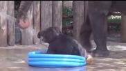 На слончето басейна му е тесен