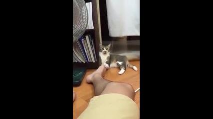 Тази котка не обича миризливи крака ха ха