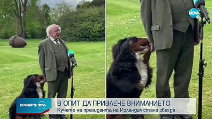 Кучето на президента на Ирландия стана звезда