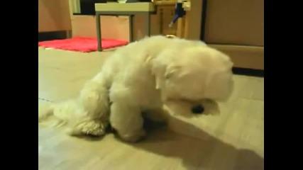 Тъжно, сладко кученце