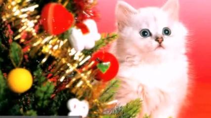Коледните Котета #christmas cats