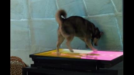 Луд фен на Alvin And Chipmunks събаря телевизора много смях :d:d:d