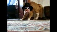 Коте изчезва с финес 2 (new version) Thriller Cat