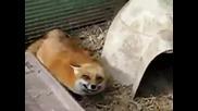 Радостна лисица :)
