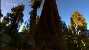 Sunrise Earth - Sequoia Light ( Part 2 / 5 ) * H D *