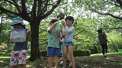 Japan: Cicadas make themselves heard as Olympics go on without fans in Tokyo