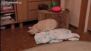 Котка прояви майчиният си инстикт за да прибере новороденото си бебе!