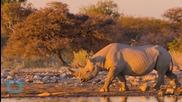 Колко струва да застреляш черен носорог?!