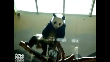 Hip - Hop Panda Dancer -
